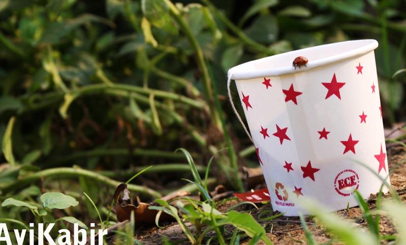 Lady bird on cup